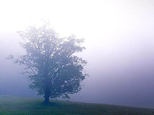 I am a lone tree.....